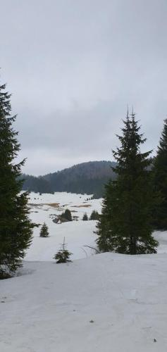 22. tradicionalni zimski uspon na Bjelolasicu